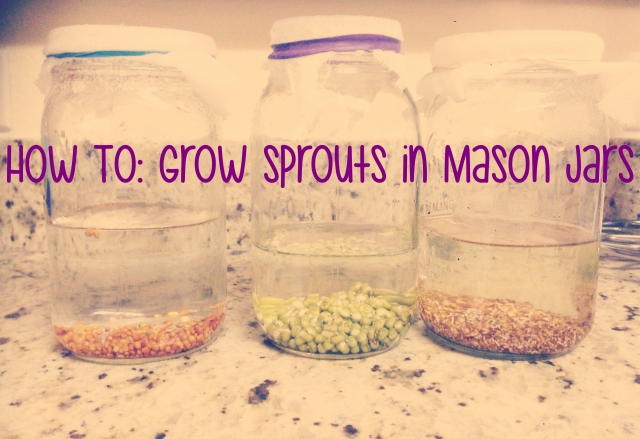 sprouts main